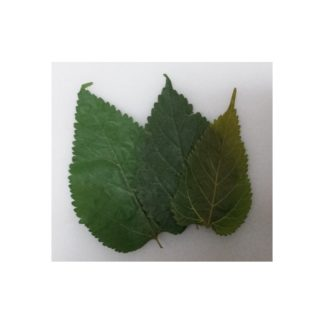 Maulbeerblaetter-Mulberry-leaves-10er-Beutel